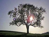 Der Familienstammbaum